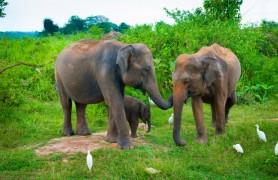 drambliu prieglauda 2