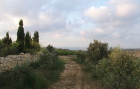 kelias i vynuogynus