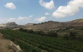 vietinis ukis Gozo saloje