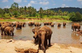 drambliu prieglauda 3
