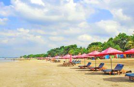 Bali papludimys