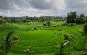 Balio sala. Indonezija