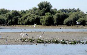 Dunojaus delta