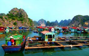 Vietnamo kaimelis ant vandens