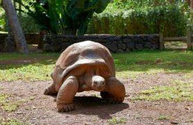 Travel-Mauritius-226504