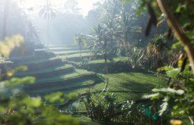 Pažintinė kelionė Balio sala