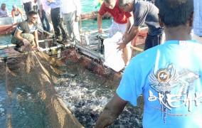 mauricijus-zvejyba