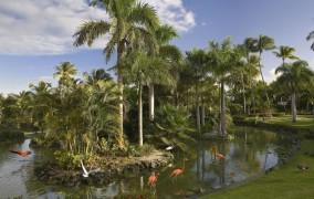 Melia Carribe Tropical ***** 35